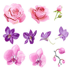 Set of pink, red, purple flowers and buds; roses, orchid (Phalaenopsis, Dendrobium) on white background, digital draw realistic illustration in watercolor style, collection for design, vector