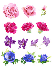 Set of pink, red, purple, blue flowers, buds; rose, carnation, orchid Phalaenopsis, anemone, white background, digital draw realistic illustration in watercolor style, collection for design, vector