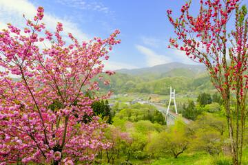 みなかみ花見山と諏訪峡大橋