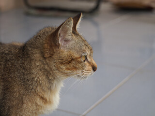 Cat looking into the distance