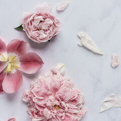 Pfingstrosen und Tulpe verwelkt auf Marmortisch