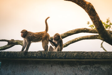 Macaques checking for bugs
