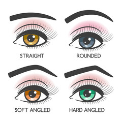 Popular female eyebrows shape set on white backdrop. Vector illustration