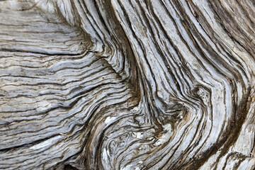 Altes Holz knorrig