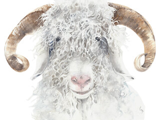 Goat angora breed farm animal wool animal portrait watercolor painting illustration isolated on white background