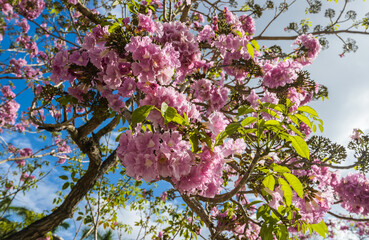 Photo of bright pink exotic flowers growing on a tree.