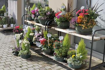 plantes chez le fleuriste