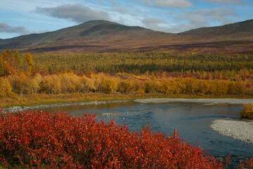 Bright autumn colors of vegetation on the river Bank. Pipudyna River, Polar Ural, Russia.