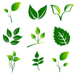Green Leaves Collection. Leaves icon vector set isolated on white background