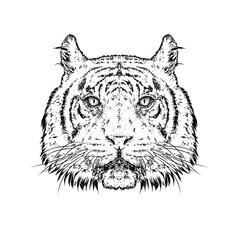A beautiful tiger. Vector illustration. Wild animal, predator.