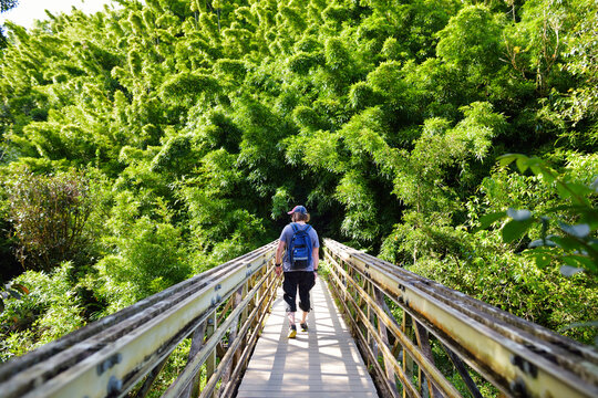 Young male tourist following the path through dense bamboo forest, leading to famous Waimoku Falls.