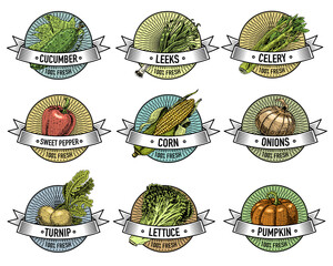 Vintage set of labels, emblems or logo for vegeterian food, vegetables hand drawn or engraved. Retro farm american style.