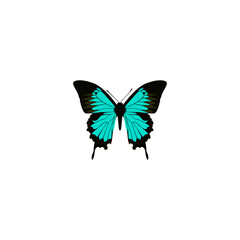 Realistic Hairstreak Element. Vector Illustration Of Realistic Copper Isolated On Clean Background. Can Be Used As Hairstreak, Bluewing And Blue Symbols.