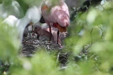 Family of Flamingos.