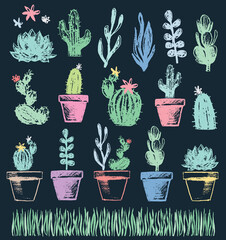 Succulent and Cactus Chalk Drawing Vector Set