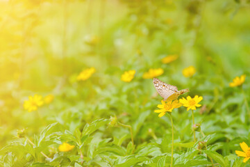 Butterfly on yellow flowers nature background