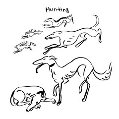 Hand Drawn Vector Dogs Set, Hunting Dogs. Ink Illustration.