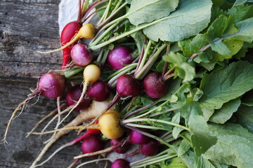 Large bunch of radishes