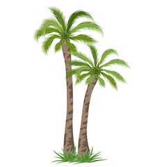 Tropical palm tree. Vector illustration