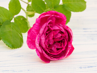 Damascus Rose has edible flower petals