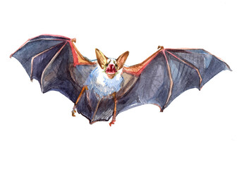 Watercolor single Bat animal isolated on a white background illustration.