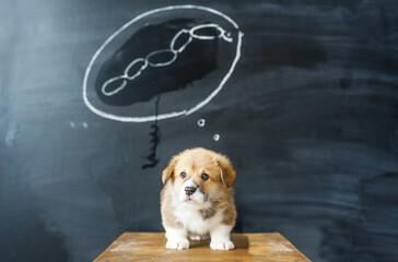 Dog dreams. The puppy dreams of a tasty sausage