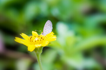 buterfly in the garden with yellow flower
