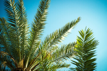 Palm trees leaves against the sky. Travel holiday background. Tropic nature.