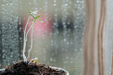 Young plant growing in the morning light and water drop from rain nature bokeh background