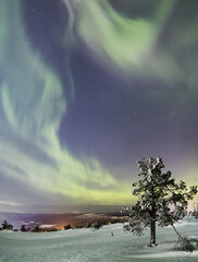 Panorama of snowy woods and frozen trees framed by Northern Lights (Aurora Borealis) and stars, Levi, Sirkka, Kittila, Lapland region, Finland, Europe
