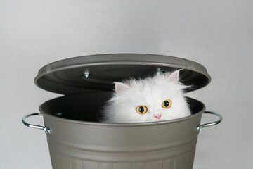 Cute white persian cat hide in a grey bucket with lid