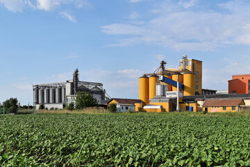 Two silos and young sunflower field in springtime