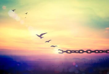 Freedom concept: Silhouette of bird flying and broken chains at sunset background.