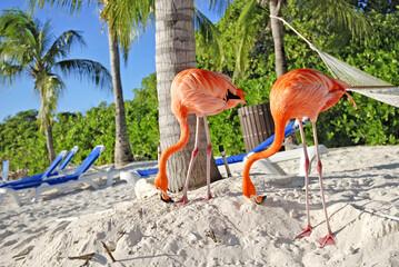 Pink Flamingo on the beach; Aruba island, Caribbean sea