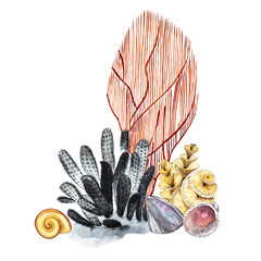 Compositions Seaweed sea life and corals object isolated on white background. Watercolor hand drawn painted illustration. Underwater watercolor background illustration.