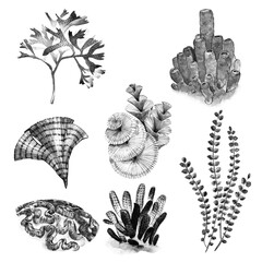 Graphic coral set. Aquarium concept for Tattoo art or t-shirt design isolated on white background.
