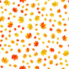 Seamless patern of maple leaves on white background