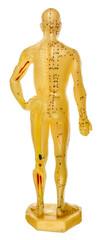 mannequin d'apprentissage, face dorsale, acupuncture chinoise, fond blanc