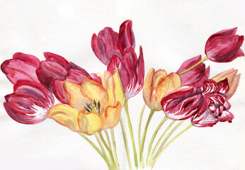 Tulips red and yellow, a bouquet of flowers, watercolor painting