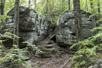 Giant Boulders in a Catskill Mountain Forest