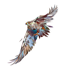 painted bright attacking bird hawk