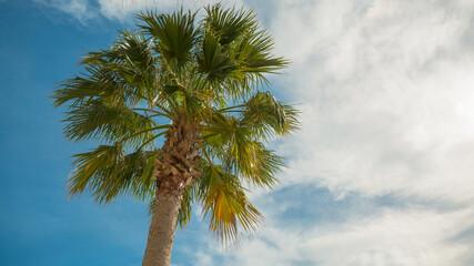 Palm tree on vacation