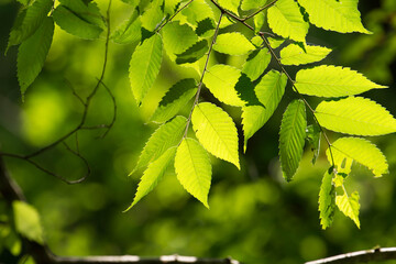 green at sunny days
