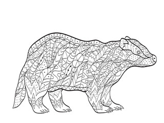 Vector coloring European badger for adults