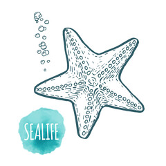 starfish drawing on white background. Hand drawn seafood illustration.