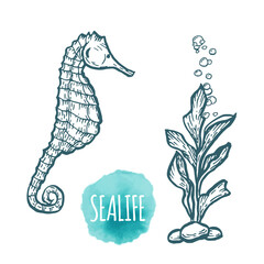 sea Horse drawing on white background. Hand drawn seafood illustration.