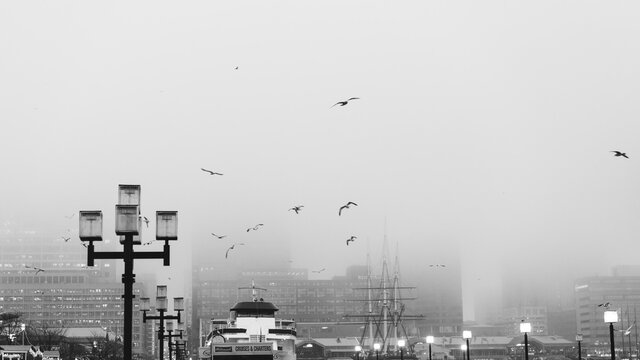 Birds Flying In Foggy Baltimore Harbor
