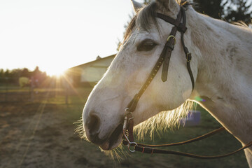 Close-up of horse at barn during sunset
