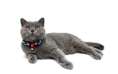 kitten in collar with a bow on a white background