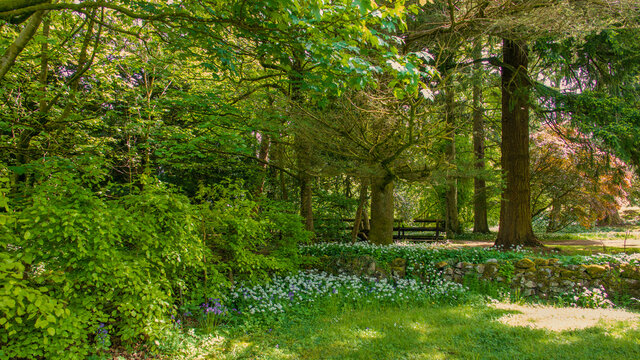 Wooded area within a country park with flowers in the shade of large trees.